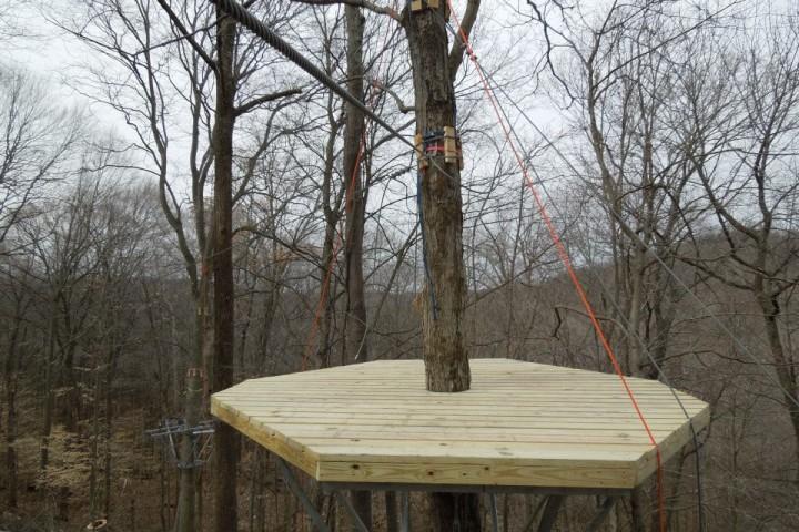 tree-platform
